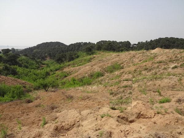 山场基地4